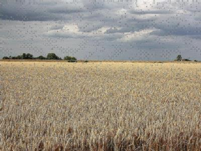 Land To The East Of Billinghay, Lincolnshire, Ln4