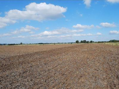 Block of Commercial Arable Land, West Winch, Norfolk