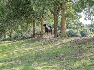 Lane End Common, North Chailey, Chailey, BN8