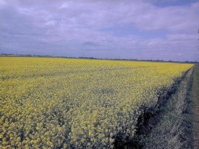153.97 acres at Asselby, Howden
