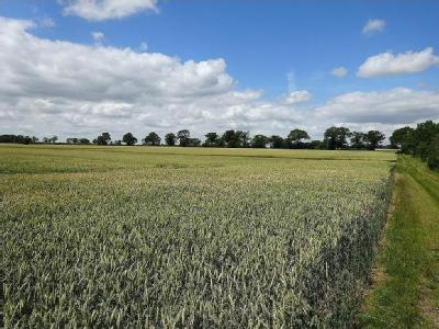 Property for sale, Monewden
