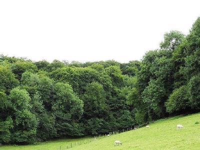 The Hermitage Woodlands, Dursley, Gloucestershire For Sale As a Whole or in Two Lots