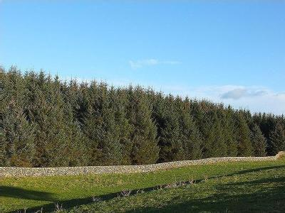 South West Scotland Forest Portfolio, Nr Newton Stewart, Galloway DG8