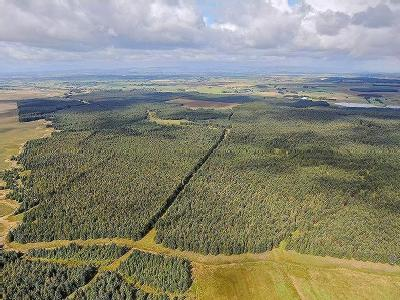 Glenouther Forest, East Ayrshire KA3